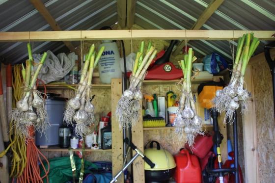 GarlicShed